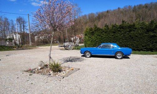 location d'une Mustang de 1965